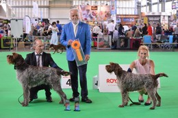 WORLD DOG SHOW  AOUT 2018 AMSTERDAM